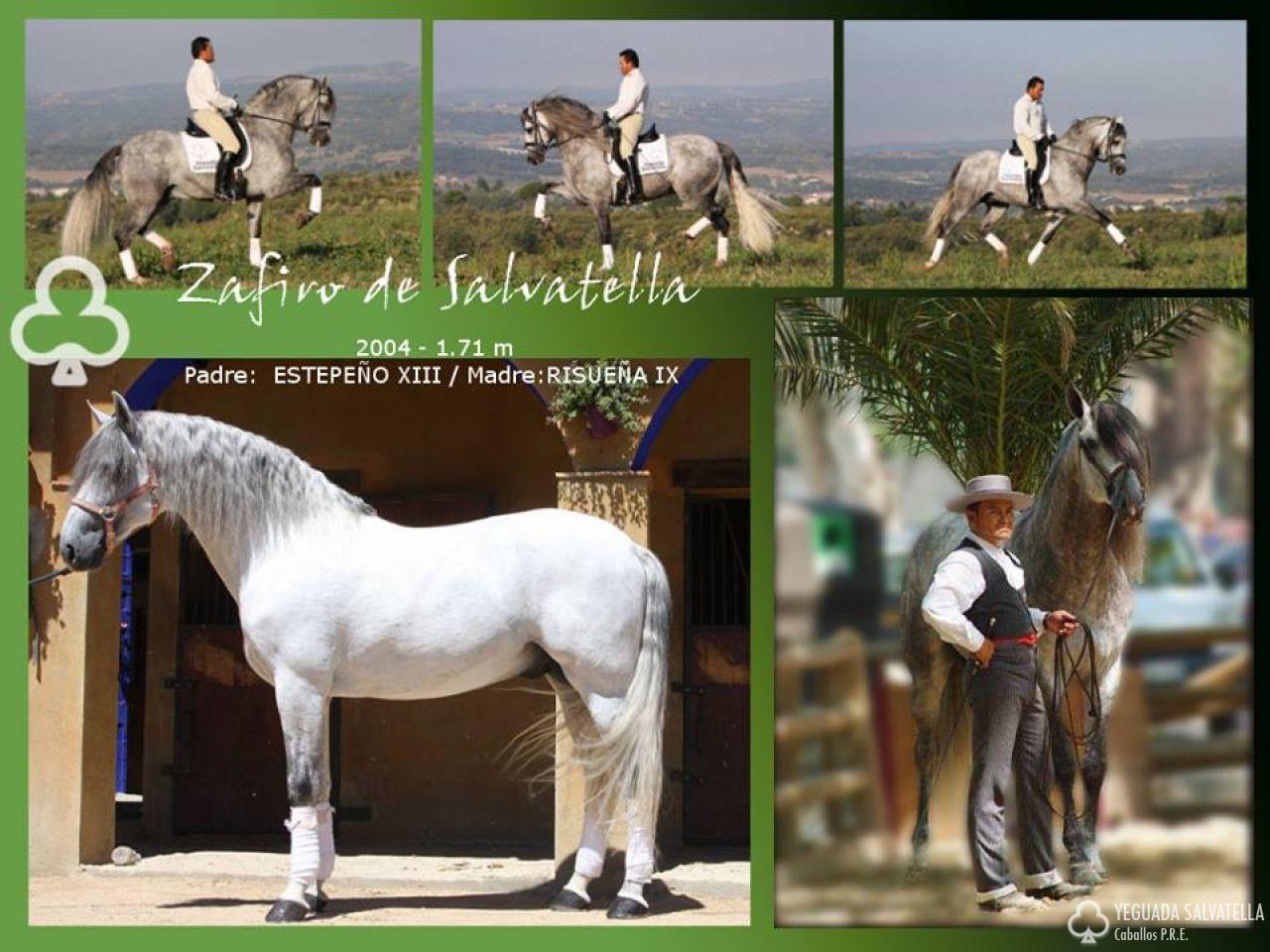 Zafiro Salvatella